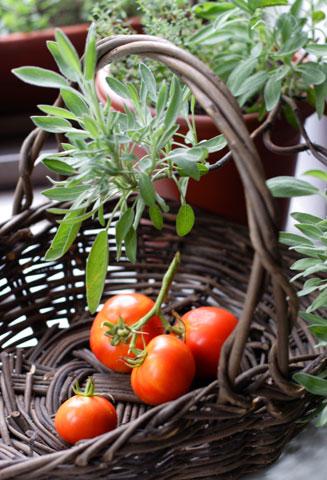 二度目の収穫トマト4個(縦)