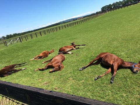 I社台の馬たち9