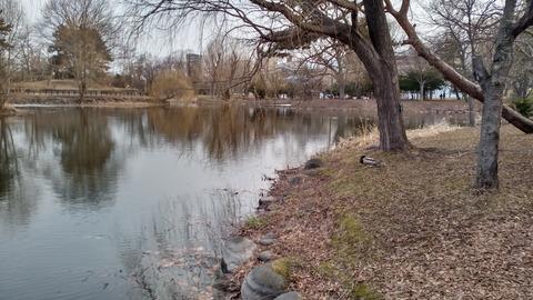 KIMG0012中島公園の鴨