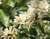 flowermay
