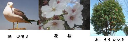 増毛町の鳥・花・木