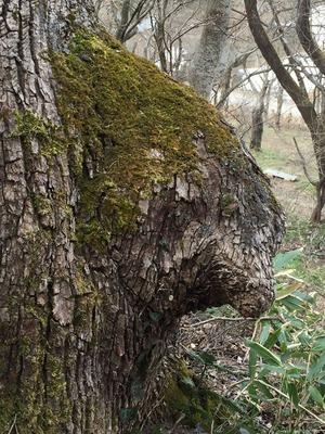 IMG_3768熊の木2