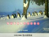 旭山動物園カレンダー2007