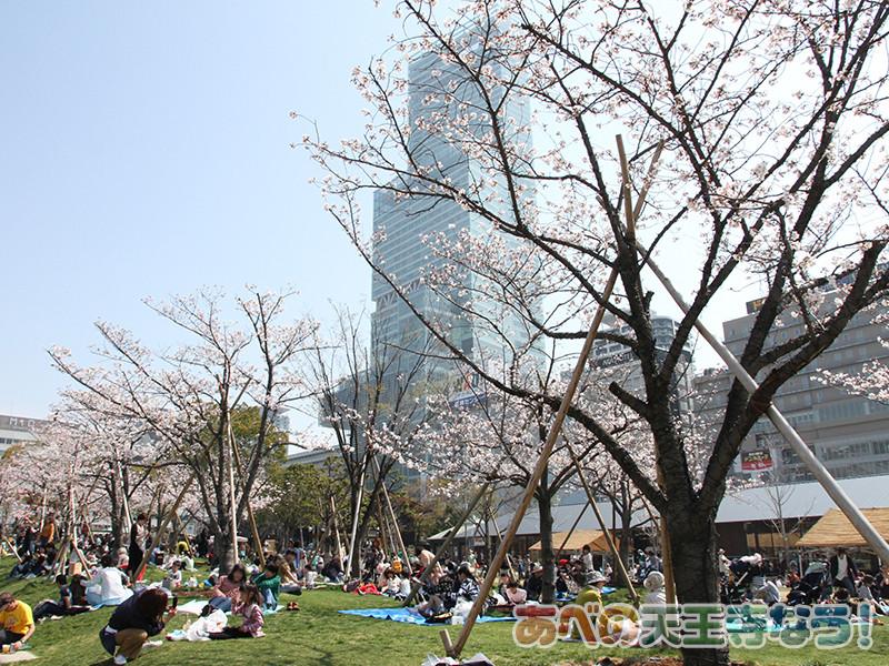 天王寺公園てんしばの桜