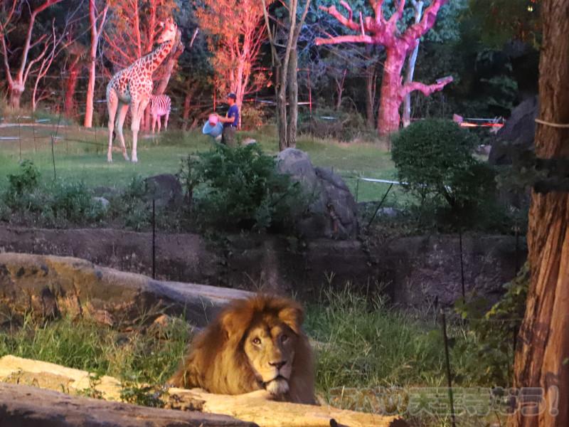 天王寺動物園「夏のナイトZOO」