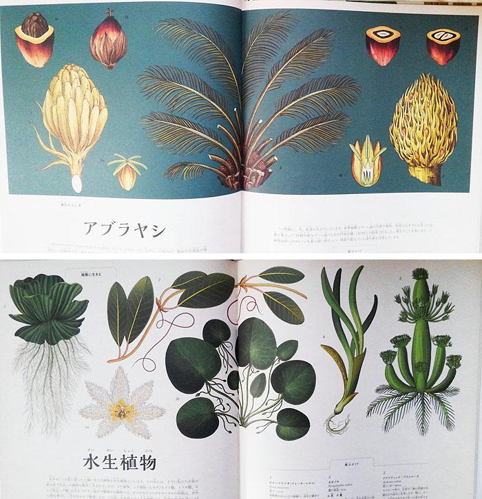 181020_botanicam3