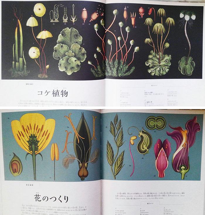 181020_botanicam2