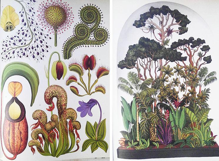 181020_botanicam5