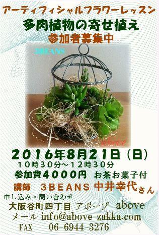 多肉植物のレッスンスリービーンズ