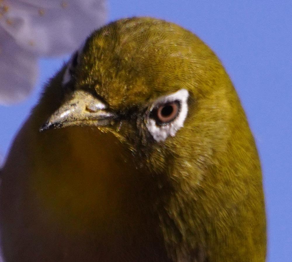 A7R4 野鳥05053_uped1000x900