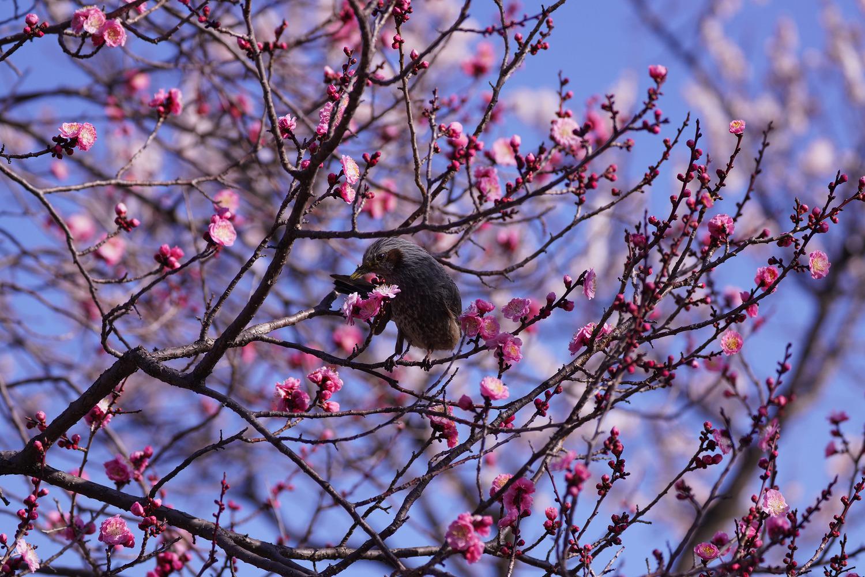 A7R4 野鳥05169