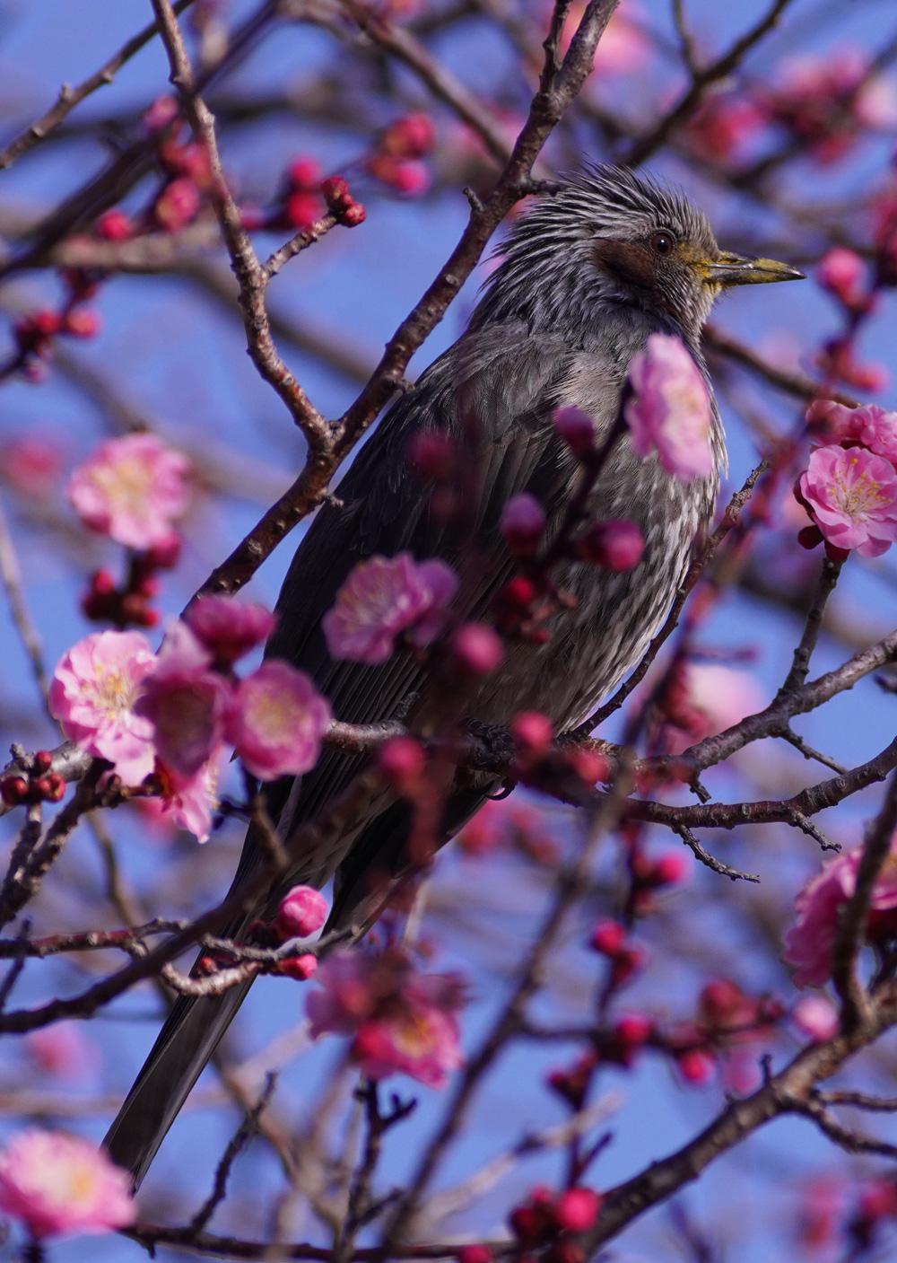 A7R4 野鳥05206_uped1000w