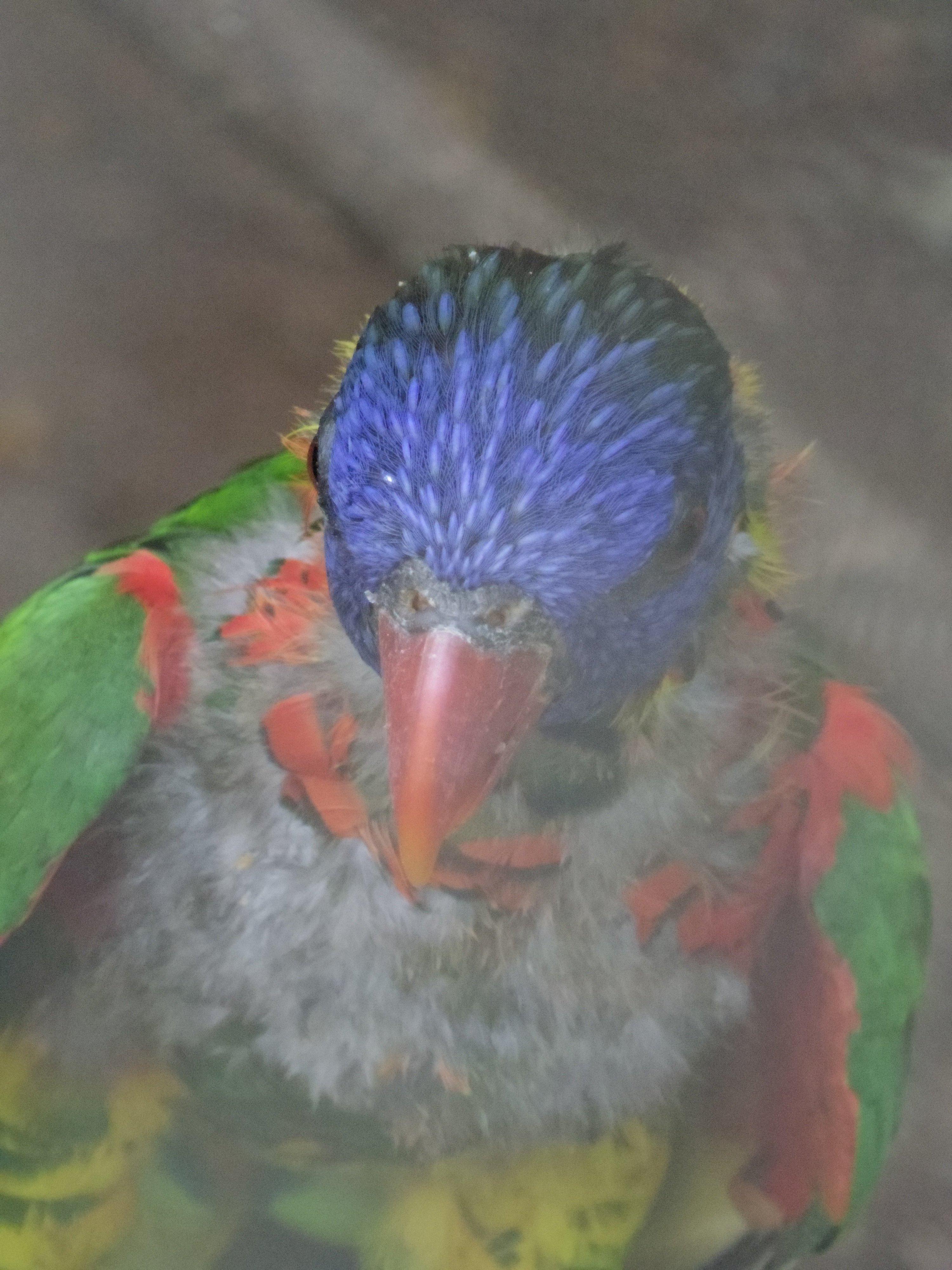 鳥さん虫達IMGP3596