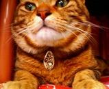 ひょう柄猫ペン」