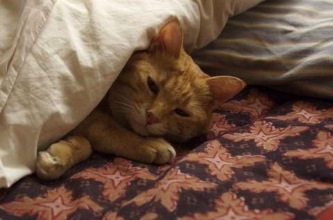 どれだけ暑くても布団かぶって寝るやつwwwwwwww