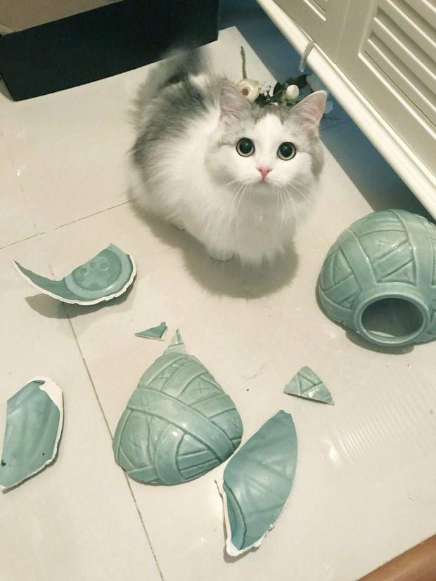 【悲報】ニャンカス、とぼける