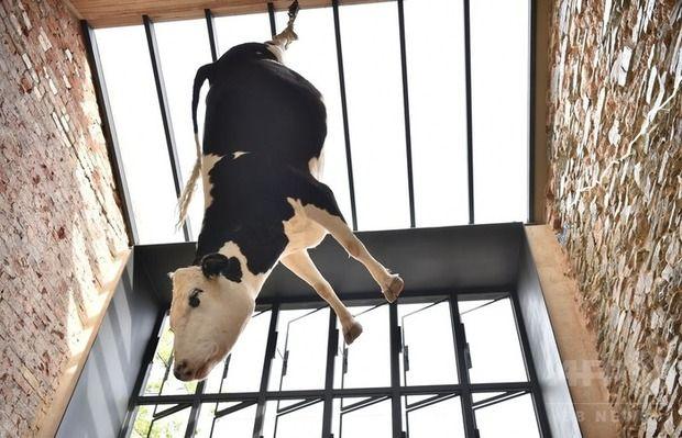"""店内に牛を吊るして""""残酷だ""""と非難殺到 店主「あなた達が食している牛を知ってほしかった」と釈明"""