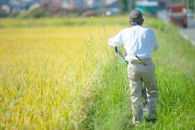 【未来】日本の農業人口、200万人割れ…高齢者の農業離れ