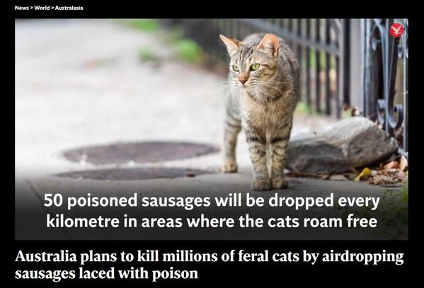 オーストラリア政府、カンガルー肉の毒入りソーセージを空中からばらまいて野良猫200万匹を殺処分へ
