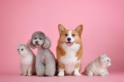 【新型コロナ】ペットを飼う人々に向け獣医師会が注意喚起→ その内容…
