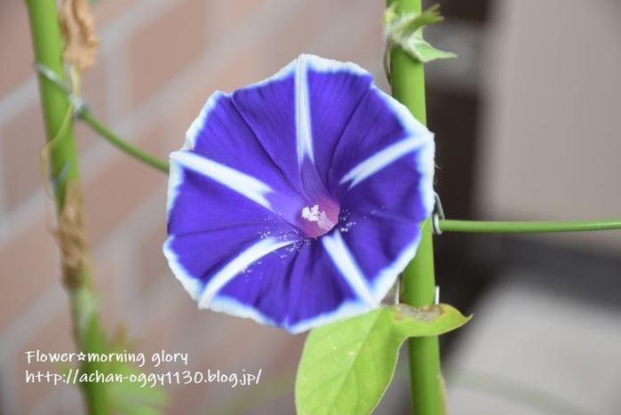 flower20190804c