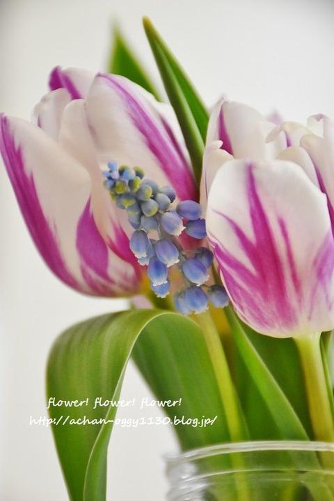 flower20180408b