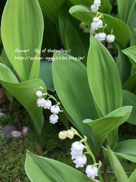flower20170429b