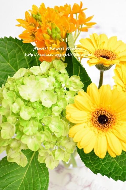 flower20180513
