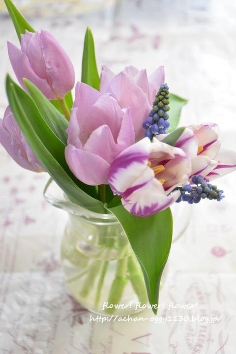 flower20180408c