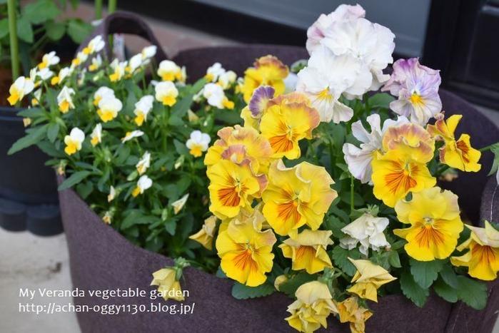 flower20210502a