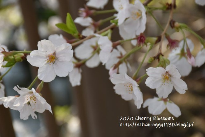 flower20200405b