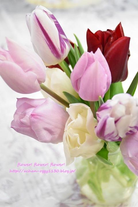 flower20180408g