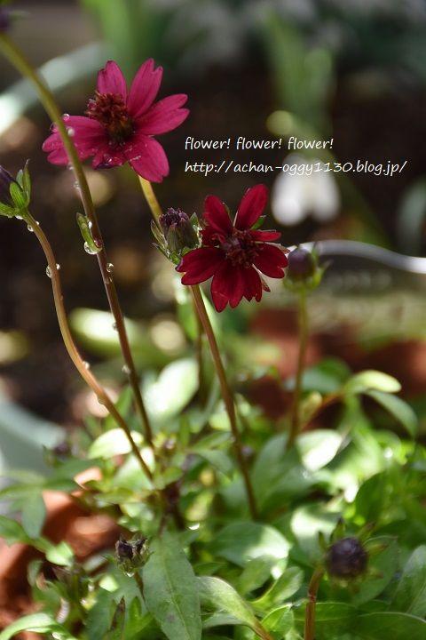 flower20170312c