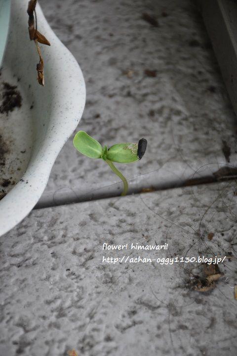 flower20170711