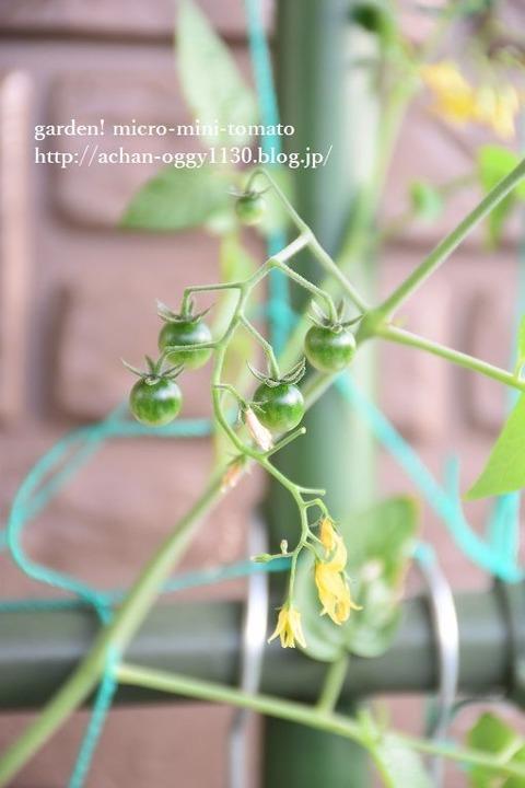 flower20181022b