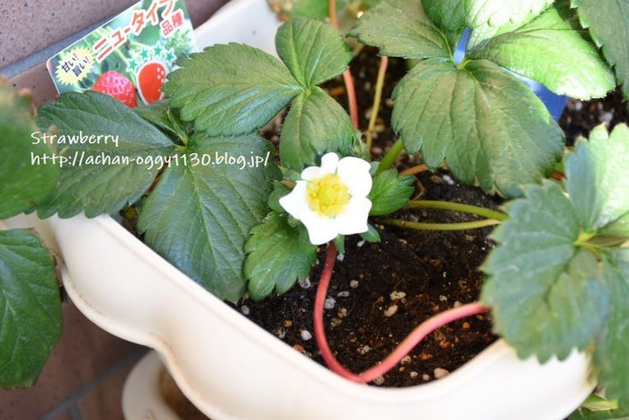 flower20191201c