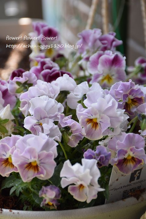 flower20170312b