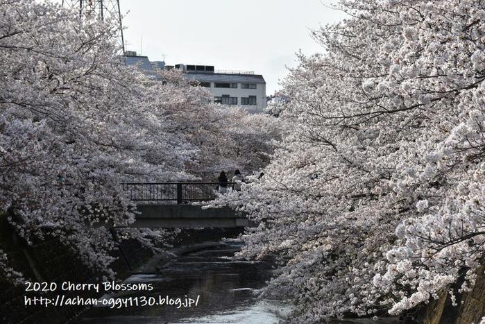 flower20200405d