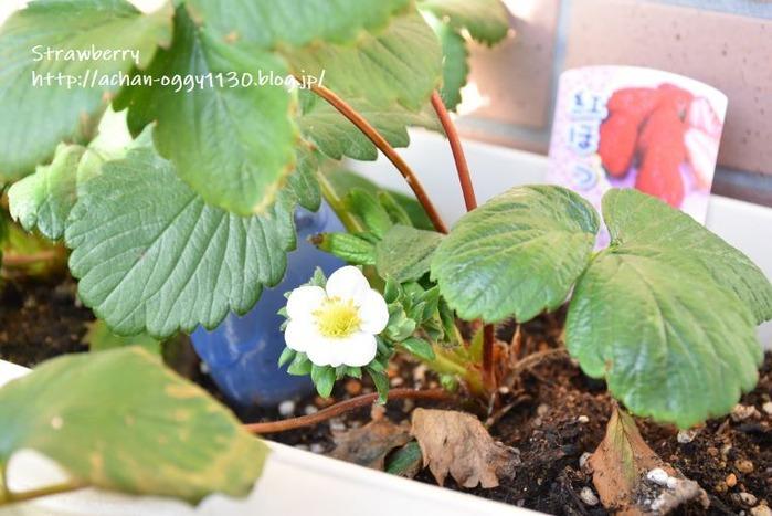 flower20191201a
