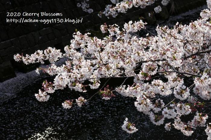 flower20200405f