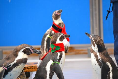 イルカランドのペンギンたち