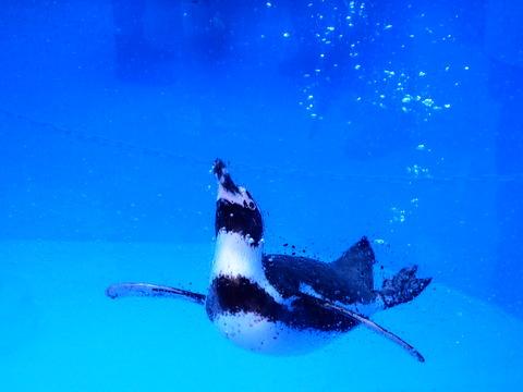 イルカランドの水槽から見たペンギン