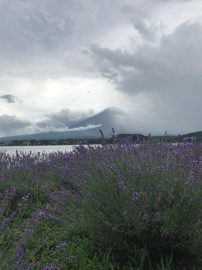 河口湖ハーブ