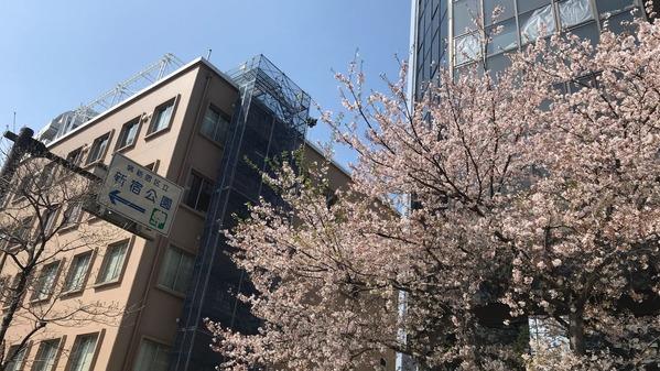 新宿桜2019