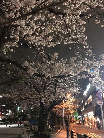 市ヶ谷夜桜