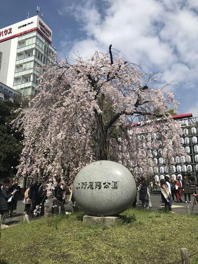上野公園桜01
