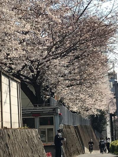 防衛省前桜2
