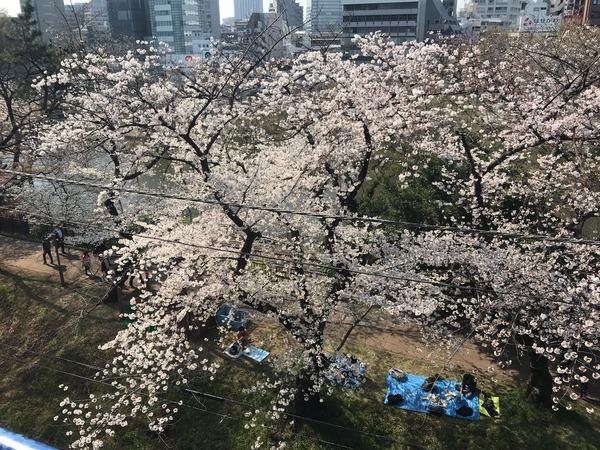 バレエ桜1
