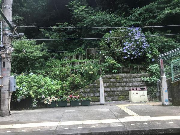 紫陽花電車01