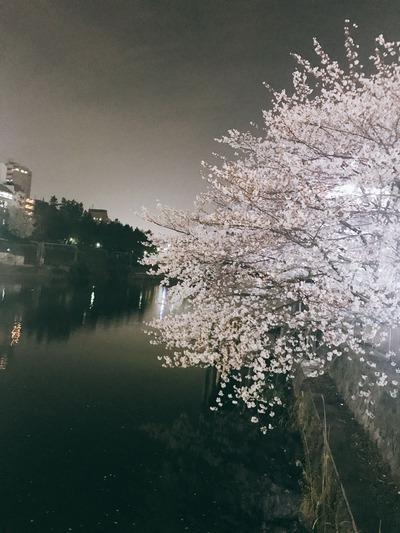 市ヶ谷駅桜